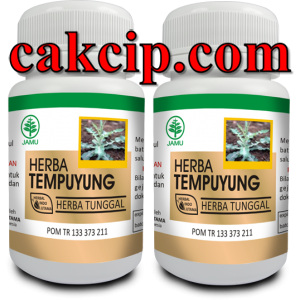 distributor kapsul herba tempuyung