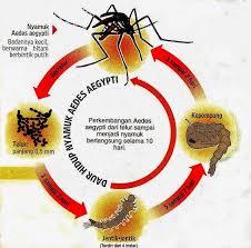 Jual Obat Demam Berdarah Surabaya
